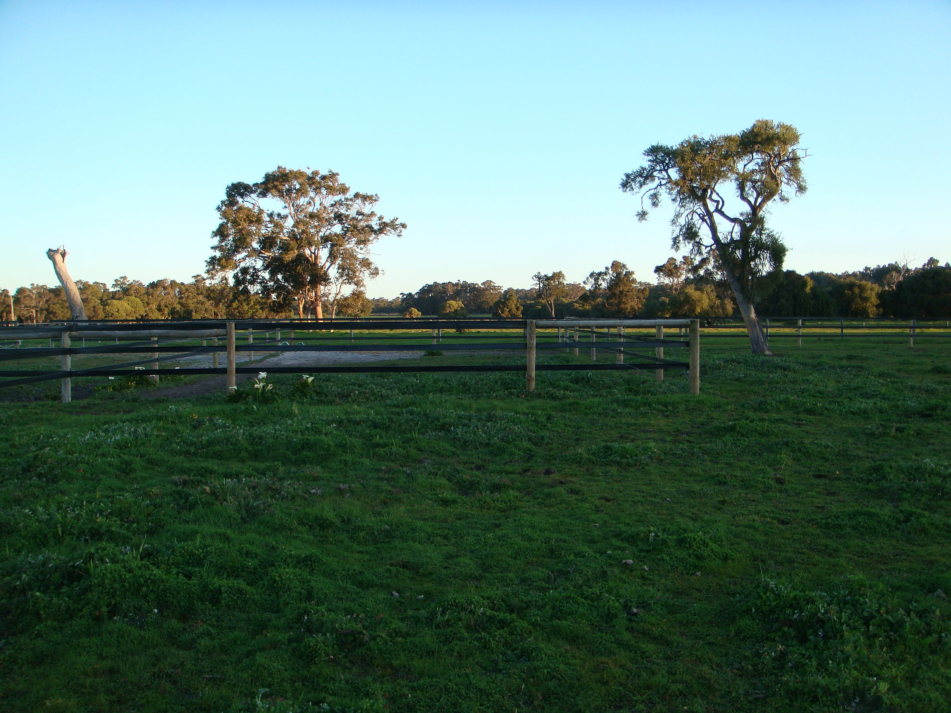 Pony Yard