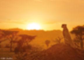 film-pro-2019-serengeti-bbc-studios-800.