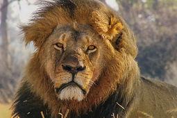 Cecil : L'héritage d'un roi