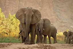 Kalahari, l'autre loi de la jungle - Acte 1 & Acte 2