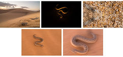 mini-serie-kai-kolodziej-golden-snake-12