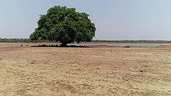 film-ultra-court-a-tree-360.jpg