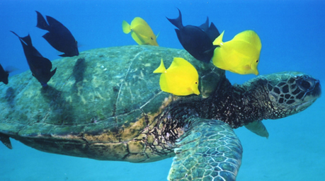 Turtleback Ltd. | BLOG