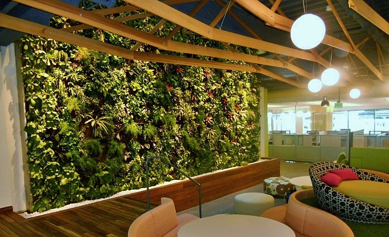 Plant rentals for offices: Google headquarters green wall measures 35 ...