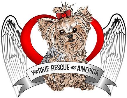 Yorkie Rescue of America