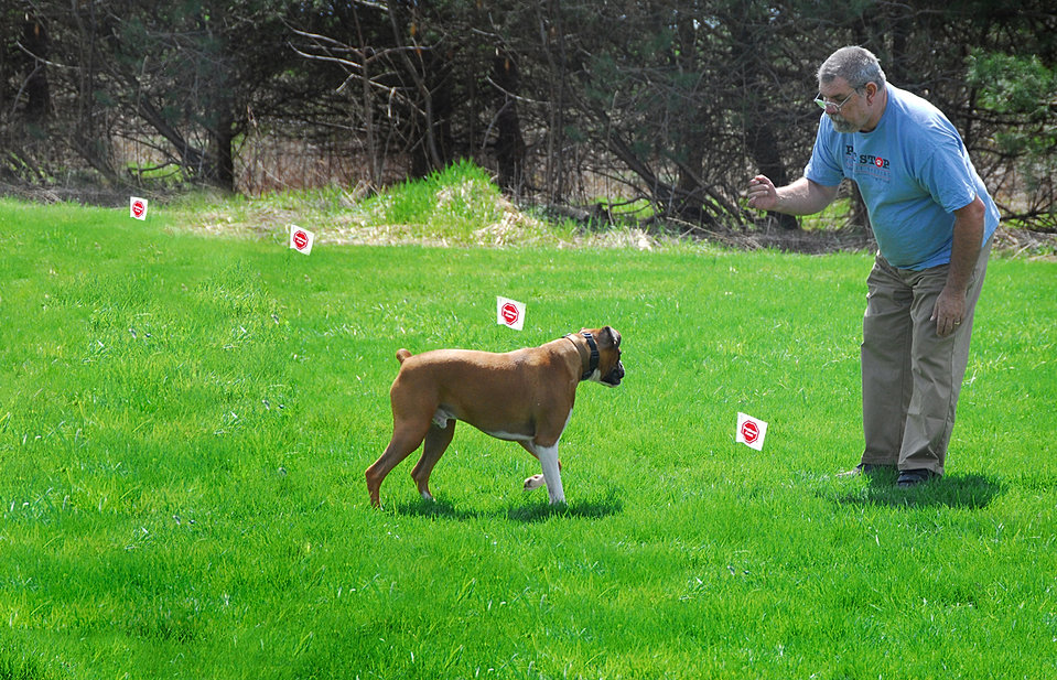 Invisible Fence brand compatible Syracuse Dog Fence