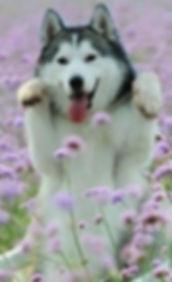 aromaterapija za pse