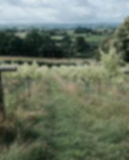farm (1 van 67).JPG