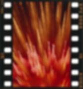 2001年 宍倉とおる写真展 /もうひとつの華-04