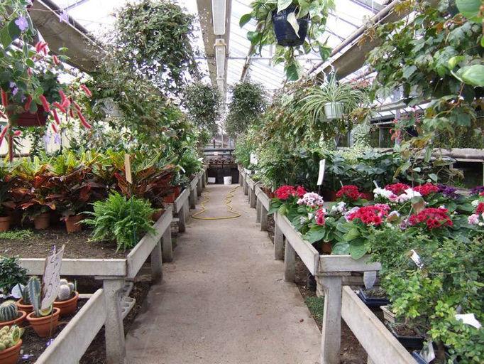 Jamila jardinage for Plantes et jardins serres