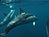 Common Dolphins UW.jpg