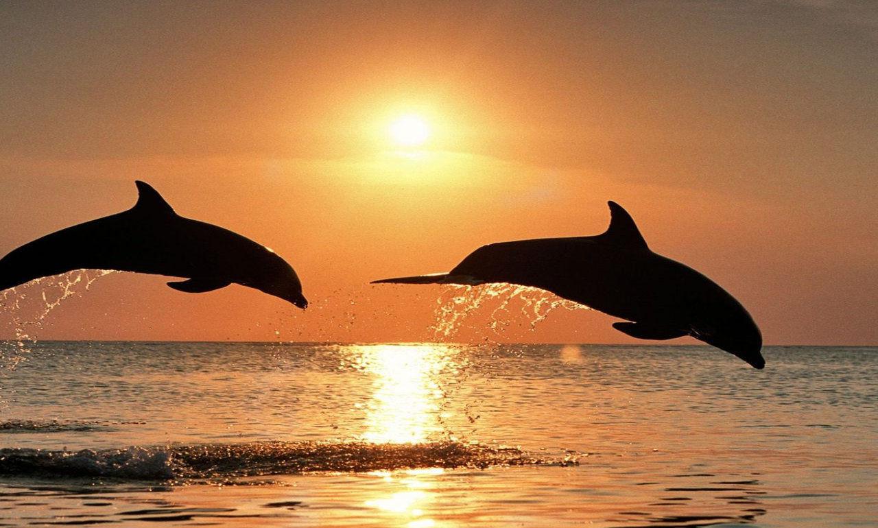 The gallery for delfines saltando for Fotomurales decorativos