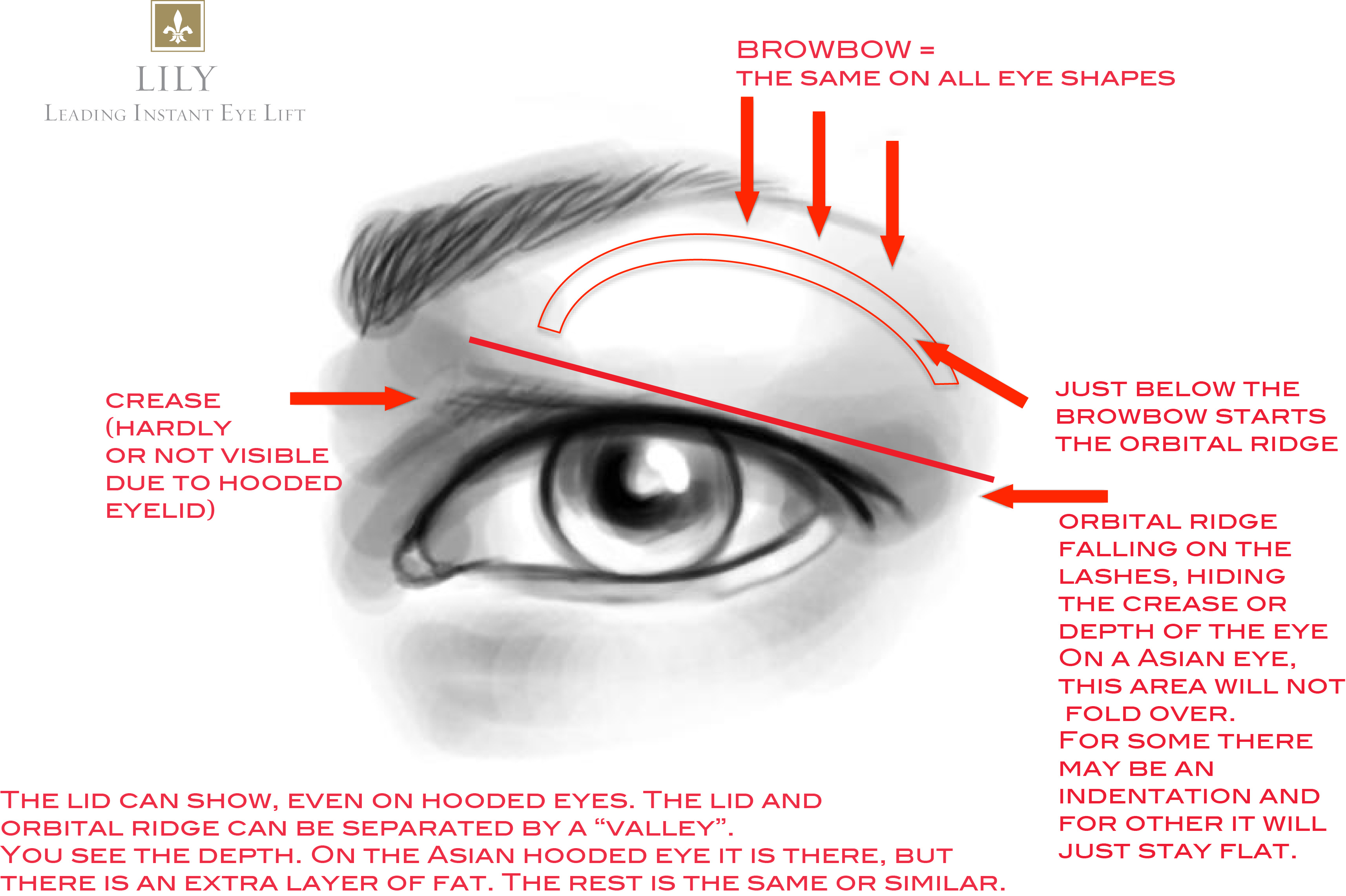 Perfect Eye Area Anatomy Mold - Human Anatomy Images ...