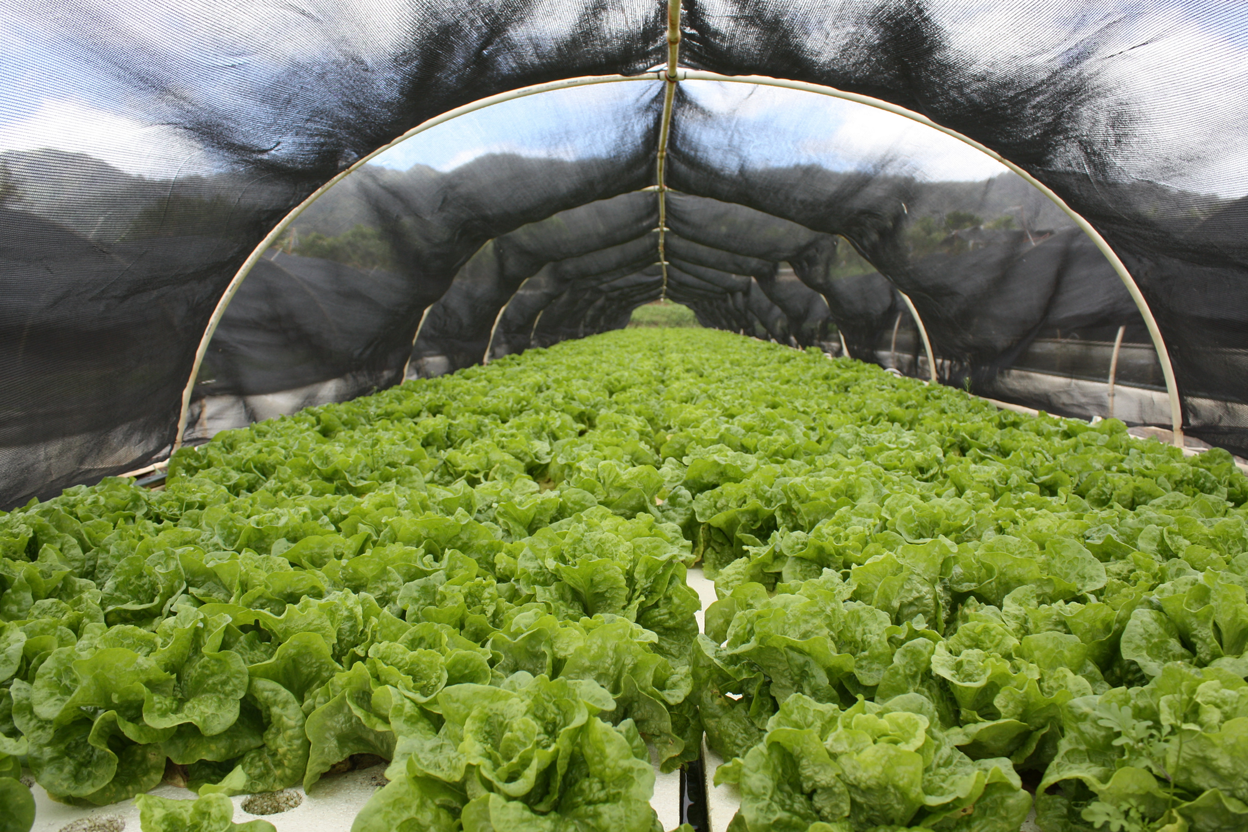 Kunia country farms educational outreach sustainable for Aquaponics hawaii