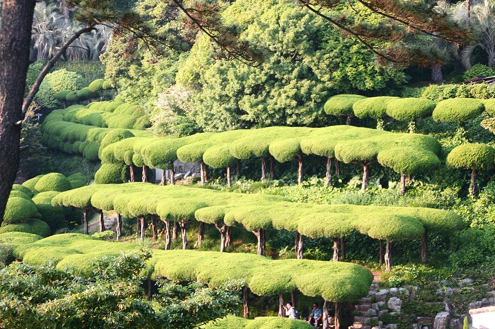 Topiary w ogrodzie botanicznym na wyspie Oedo, Korea.