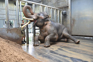 melbourne-zoo-asian-elephants-11666485.j