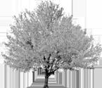 rb_tree_001