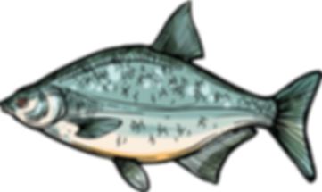 poisson ô fil de l'o Pornichet