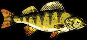 poisson ofidelo pornichet peche