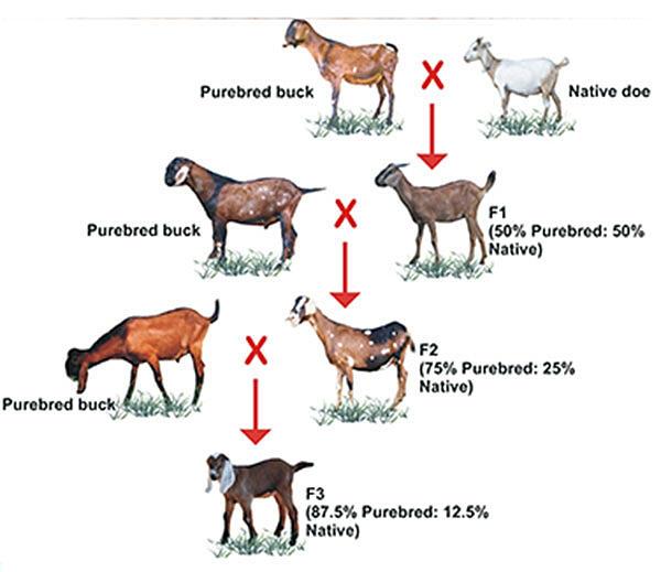 Stock options philippines
