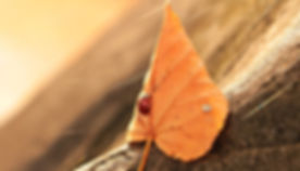 ladybug-1789065_1920.jpg