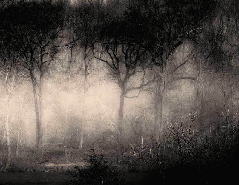 Forrest in Fog