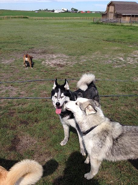 Agility Training Dogs Calgary