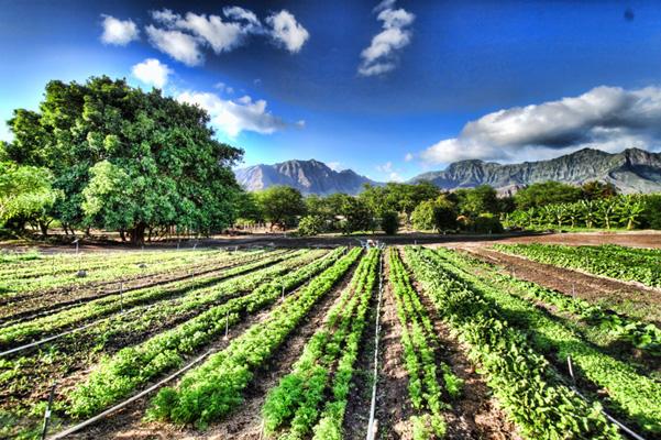 Kahumana Organic Farm and Cafe Community