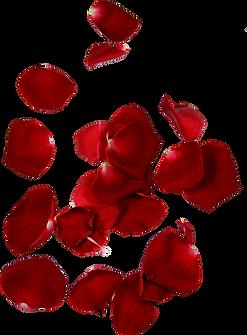 pngkey.com-falling-petals-png-945100.png