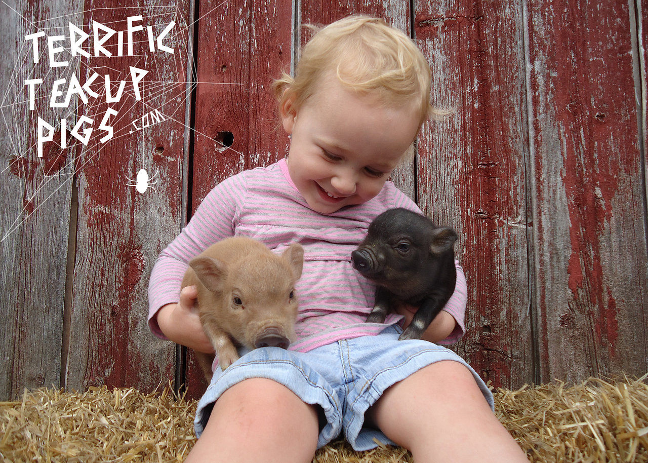 Rue Loves the Piglets!