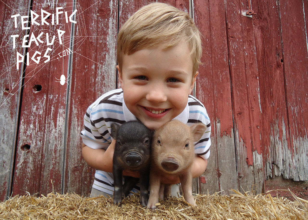 Hank and Piglets
