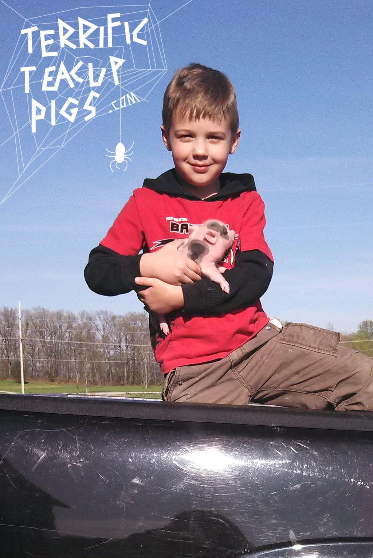 A Boy A Piglet A Truck