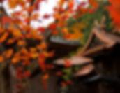 Japan_ - 108.jpg