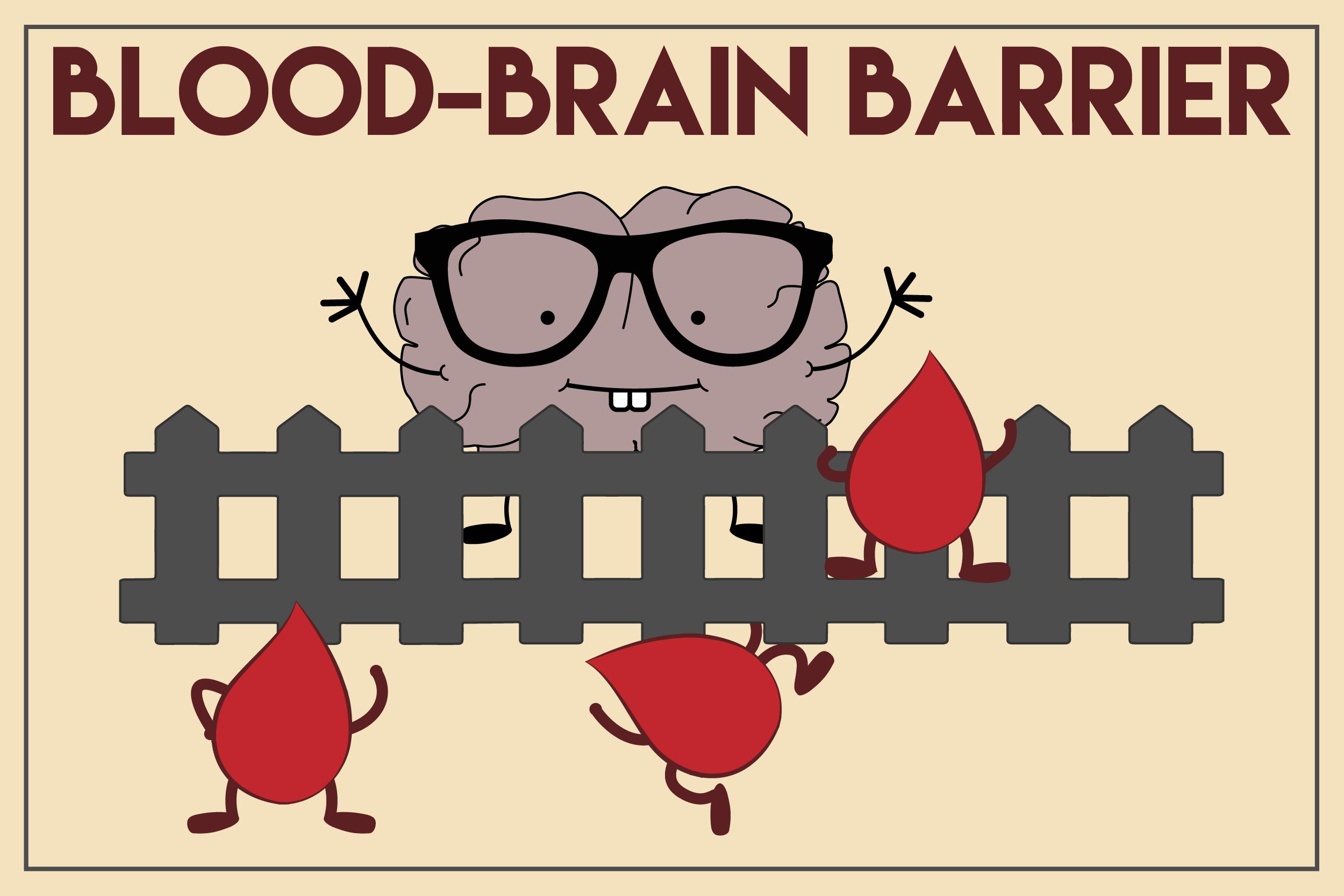 What is the blood-brain barrier? | Brain-Blog | A neuroscientist ...