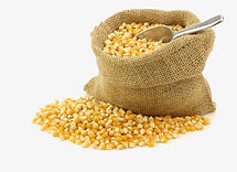 coroun-clipart-dried-corn-3.jpg