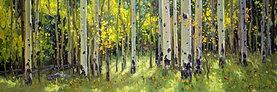 Aspen Trees in the Light