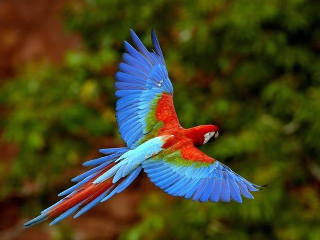 En riesgo, tercera parte de las aves en México: expertos