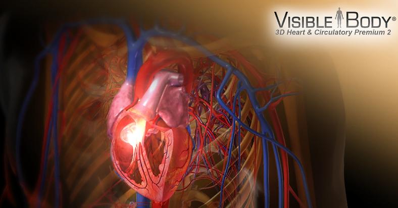 Anatomia HUmana   Atlas de anatomía en 3D Corazón y vasos