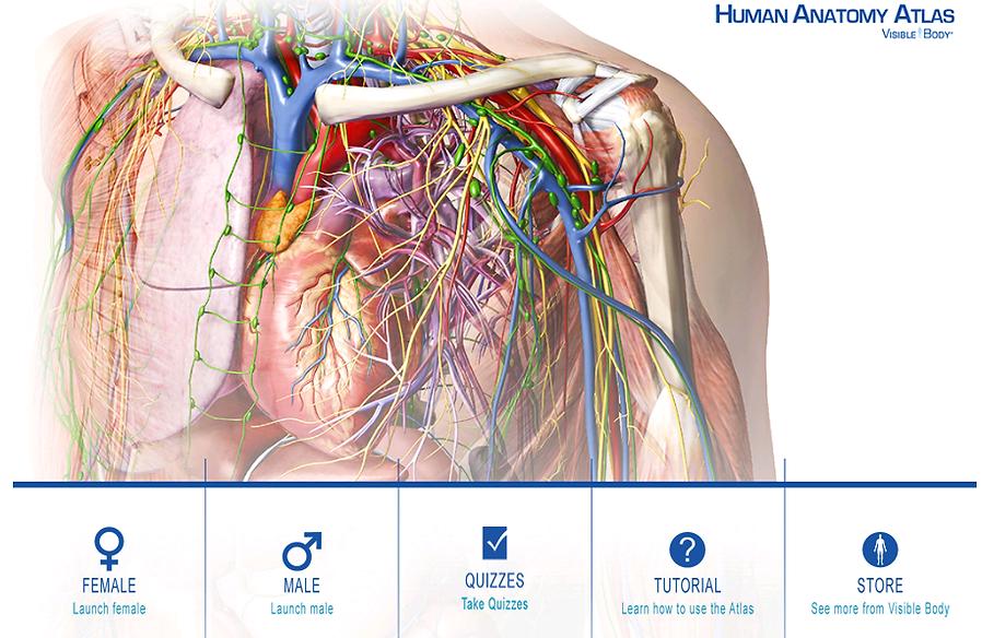 Anatomia HUmana   Atlas de anatomía en 3D Organos y sistem