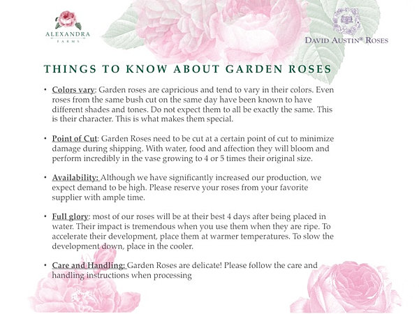 Garden rose wedding guide wedding guide things to know about garden roses junglespirit Gallery