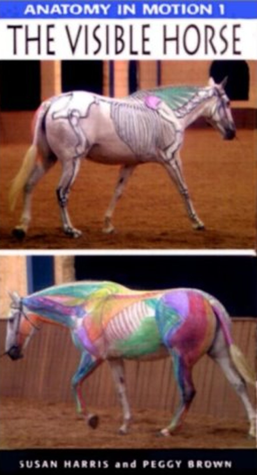 Anatomy In Motion I: The Visible Horse DVD