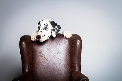 Creative Animal Creative Animal Portraits| Pet
