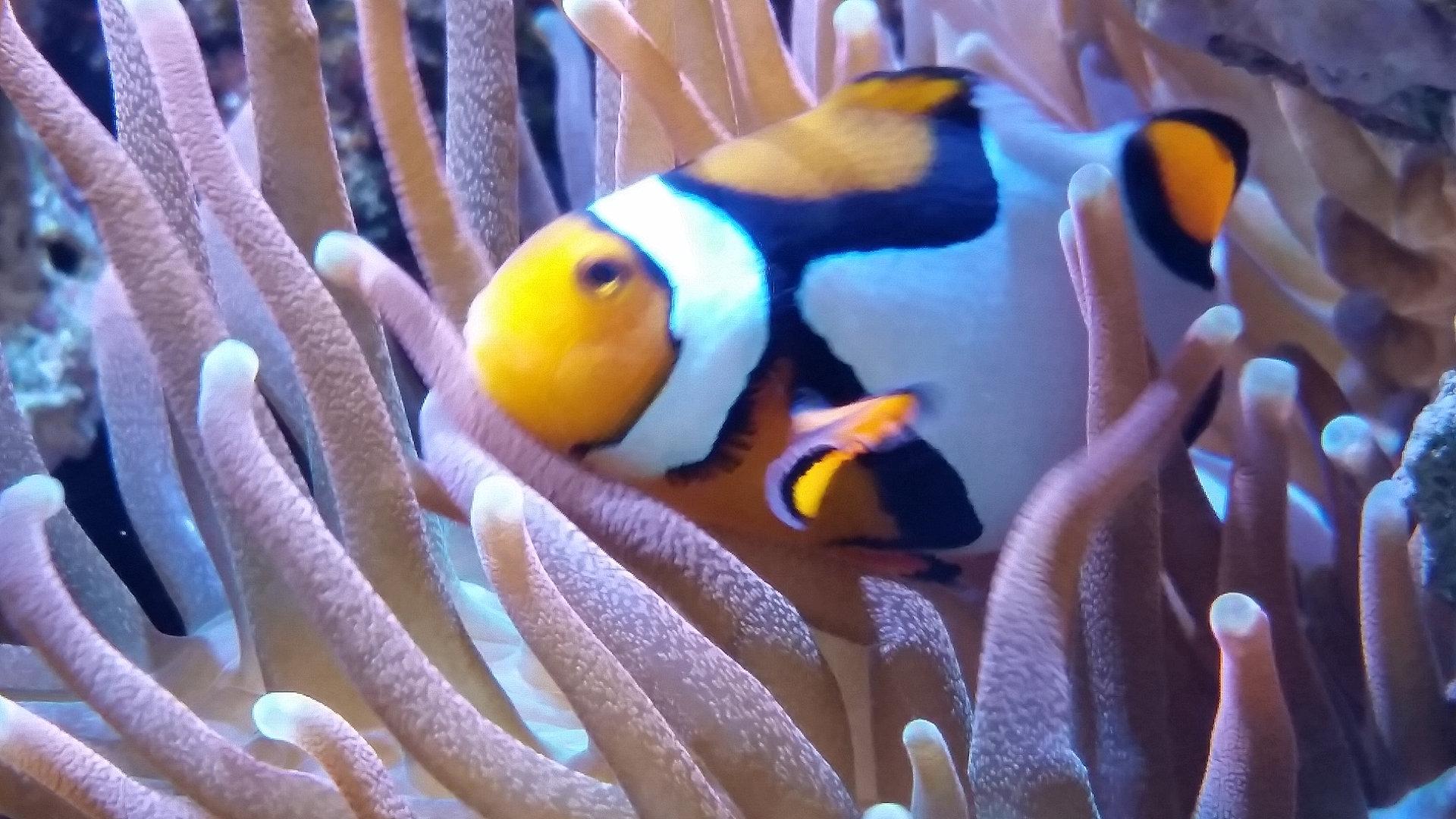 Fish aquarium in bangladesh - Aquarium Sales Service Installation