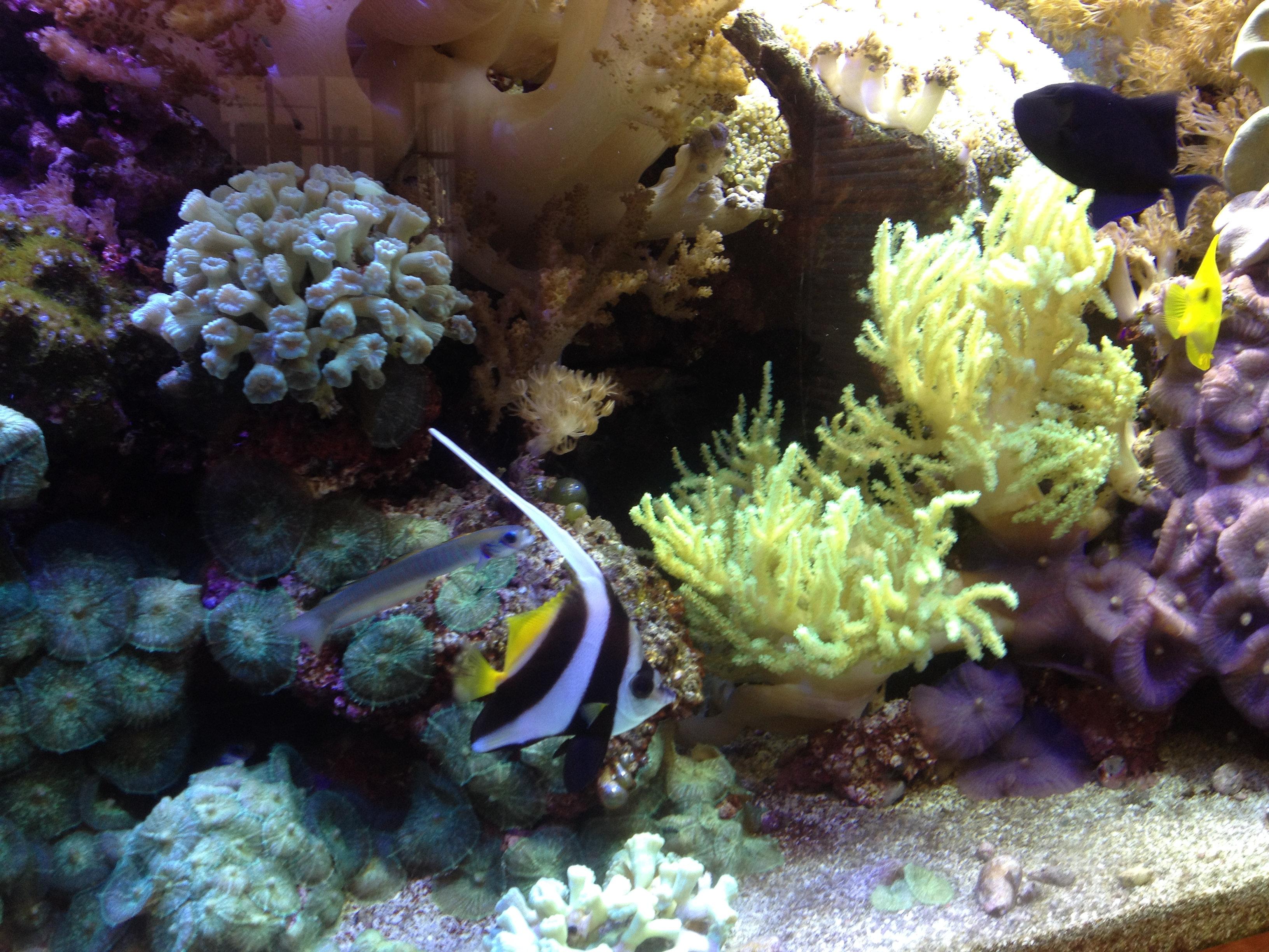 Fish aquarium in bangladesh - Aquamark Aquarium Displays Aquarium Service Nj