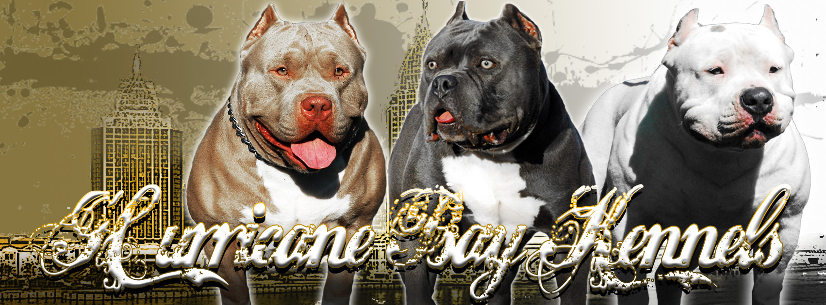 Blue pits for sale in kentucky - Blue Pits For Sale In Kentucky 39