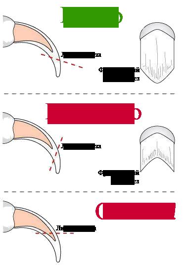 Схема подрезания когтей