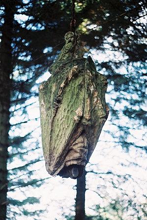 ''Hanging Bat''