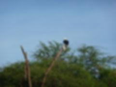 Giraffe in the Masai Mara, Wildlife Wonder, OTA