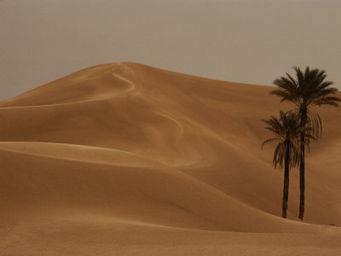 tree & sand-dunes