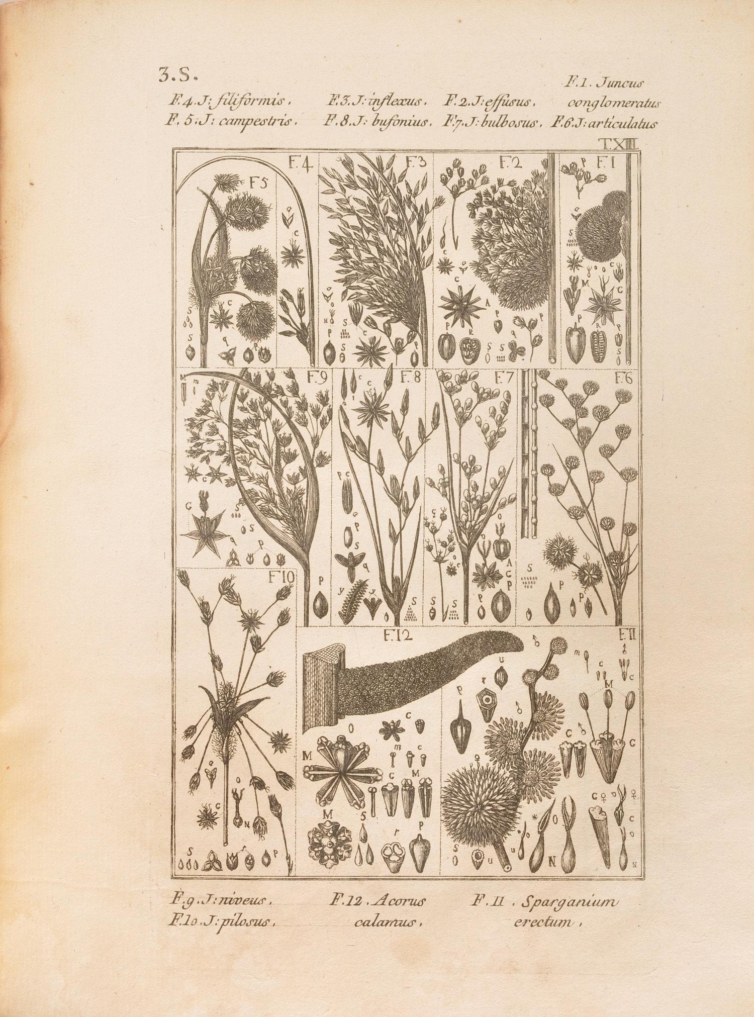 Carnet d images botanique for Cie 85 table 4